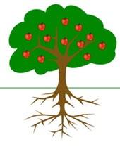 Äppelträd rötter
