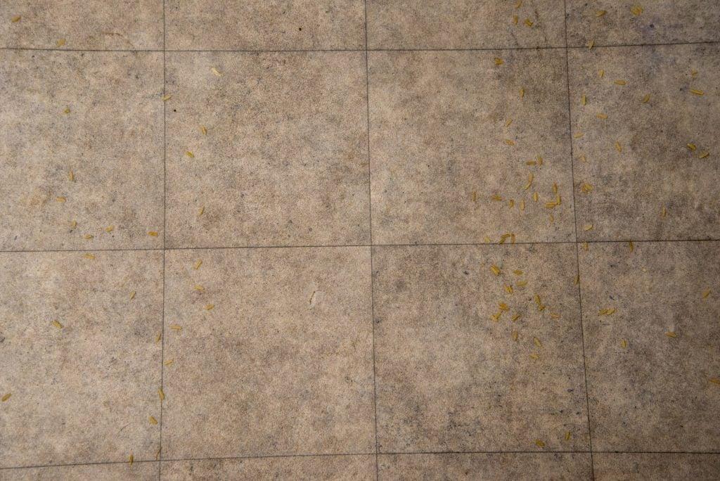 Dyson Micro 1,5 kg rent hårt golv