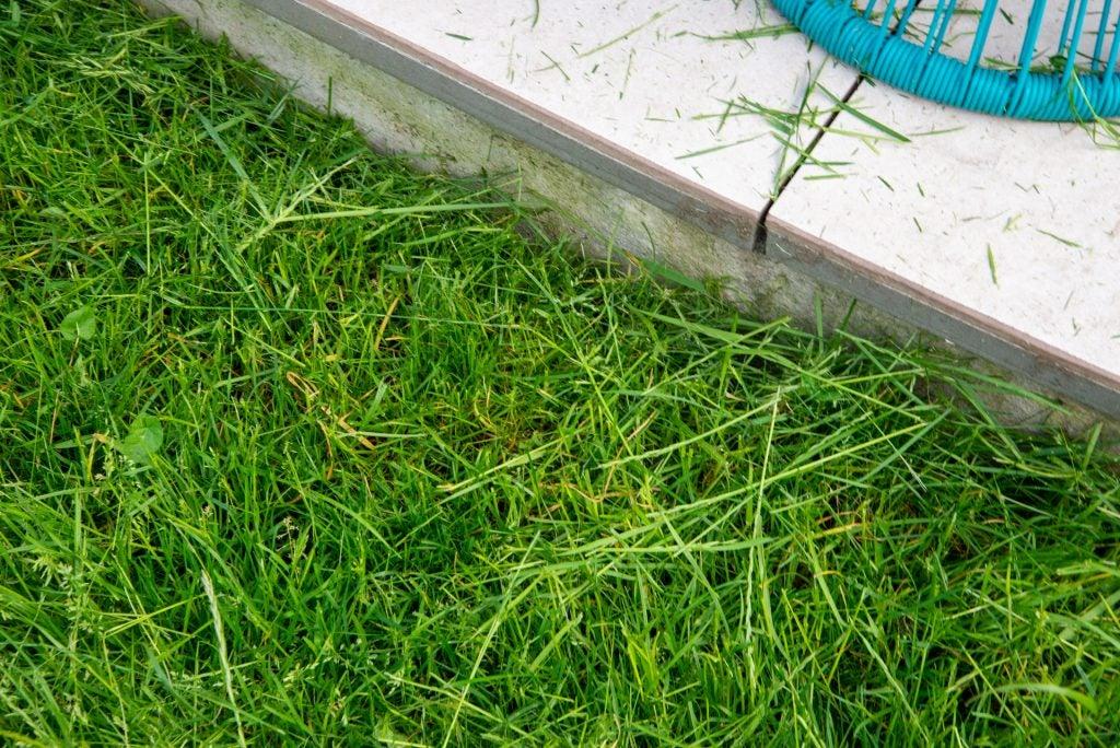 Stihl FSA 57 Trådlöst grästrimmergräs efter kapning