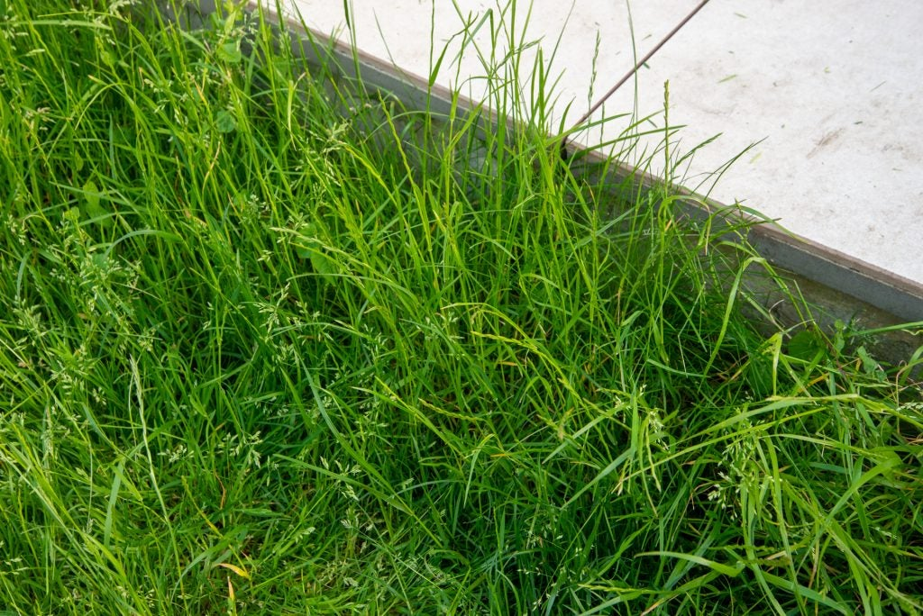 Stihl FSA 57 sladdlöst grästrimmergräs innan det klipps