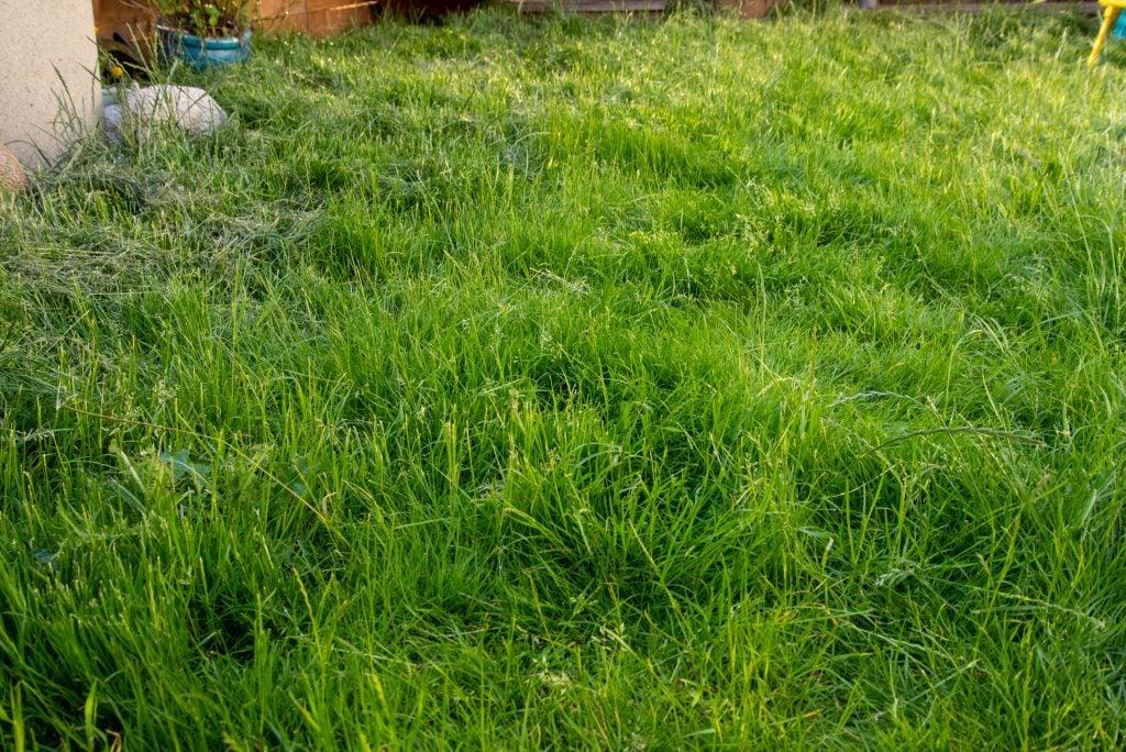 Stihl RMA 339 C långt gräs