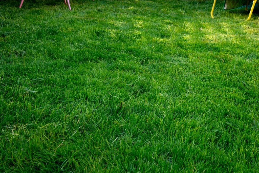 Stihl RMA 339 C gräs efter klippning